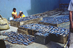 Scenes from Mindelo: Fish Market