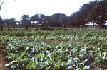 Farm in Madeiral