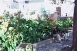 Garden in Villa da Riberia Brava