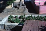 Garden at Home in Villa da Ribeira Brava