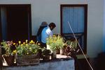 Housing in Villa da Ribeira Brava