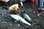 Fisherman in Tarrafal, São Nicolau
