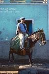 Man on Donkey