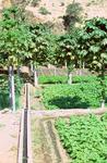 Farm Near Assomada