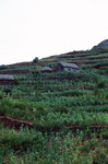 Mountainside Farming