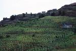 Mountain Farm Village