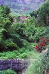 Paul's Lush Landscape