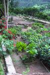 Terraced Garden Along the Ribiera do Paùl