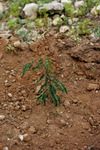 Volcanic Caldeira To Be Reforested with Leucina