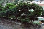 Ribeira Brava: Garden