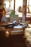 Tuna Fish On Scale