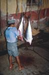 Tuna Cannery