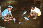 Workers at Tuna Cannery; Tarrafal