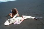 Gutting a Shark
