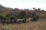 Vegetation on Brava; Village