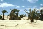 Sand Dunes of Boa Vista (2 of 2)
