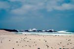Praia de Cabral (1 of 5)