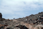 Rocky landscape with Goats