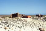 Mule standing on Rocky Beach