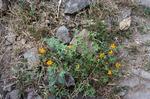 Flora Growing Along Cova (1 of 2)