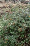 Flora Growing Along Cova (2 of 2)