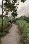 Descending the Ribeira de Paul (1 of 2)