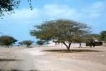 Main Road in Calheta