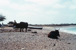 Villagers and Livestock Near the Short