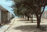 Shady Street in Calheta