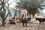 Village Life in Calheta