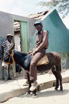 Two Men and a Donkey, Calheta