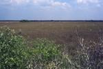 The Everglades: Sawgrass Prairie