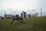 Lexington: Thoroughbred Park