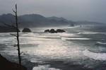 Canon Beach: Coastal Orgeon