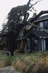 Canon Beach: Wind Swept Trees