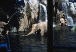 Walt Disney World: Elephant pool in the Jungle Cruise